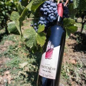 Pinot Noir Pirra de Ban